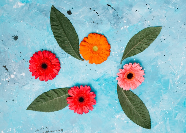 Gerbera flowers with green leaves on table