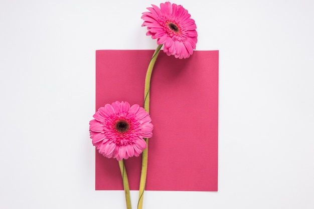 Gerbera flowers with paper sheet on table