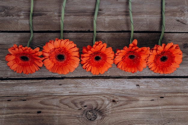 Gerbera flowers on a wooden gray background