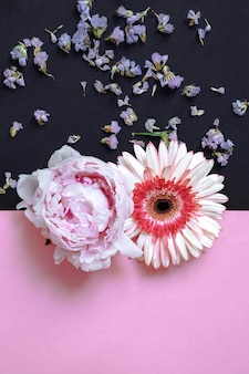 Gerbera and peony flower on pink and black backdrop