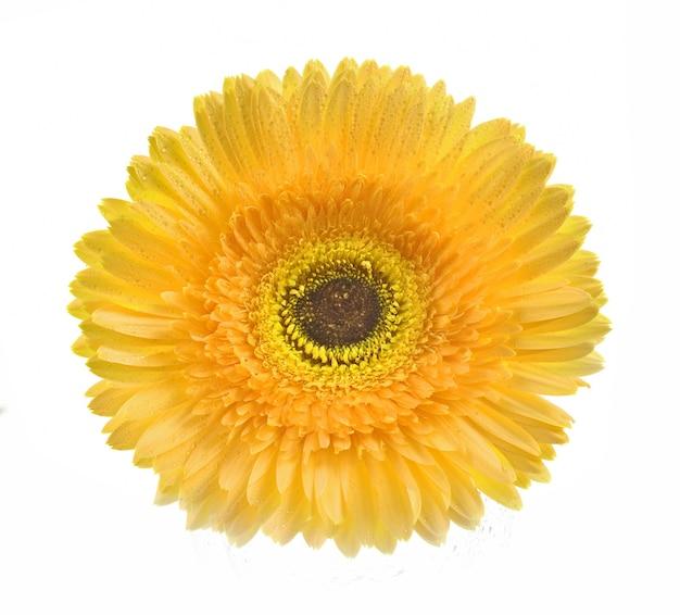 화이트에 gerbera 노란색 꽃
