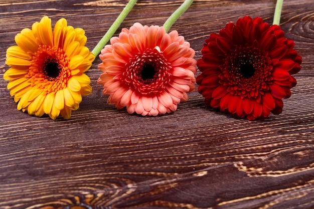 나무 배경에 gerberas입니다. 나무 표면에 화려한 꽃입니다. 꽃의 상징적 의미. 자연의 선물.