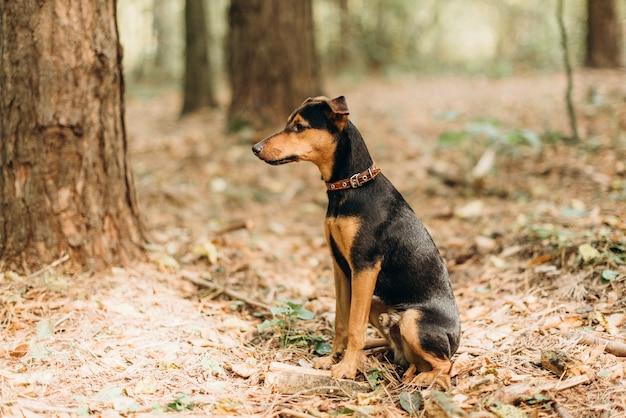 森の中に座っているドイツの犬のジャーマン ・ ハンティング