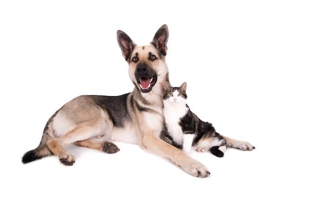Немецкая овчарка и кошка в дружеской позе.