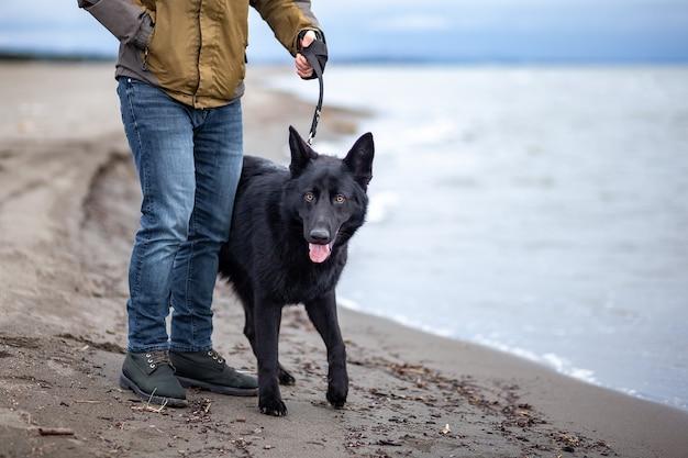 ジャーマンシェパードとその飼い主が黒海、ポティの海岸に沿って歩く