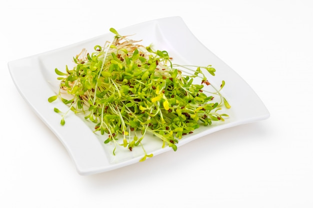 Germinated fresh and raw alfalfa sprouts.
