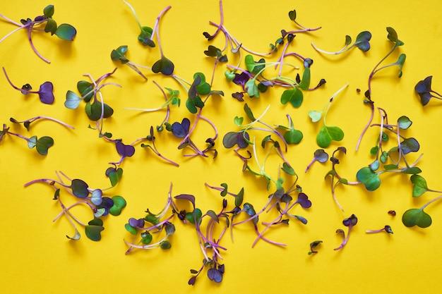 Проросшие проростки редиса на желтом