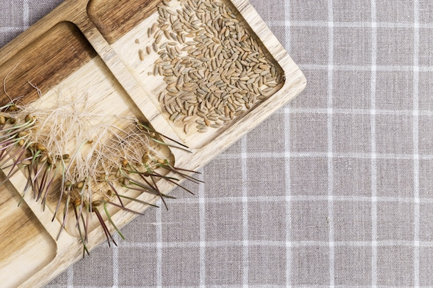 Прорастание семян пшеницы на продукты питания. здоровая пища, ростки пшеницы чрезвычайно полезны для организма человека.
