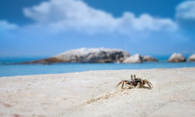 바닷가 모래에 유령 게