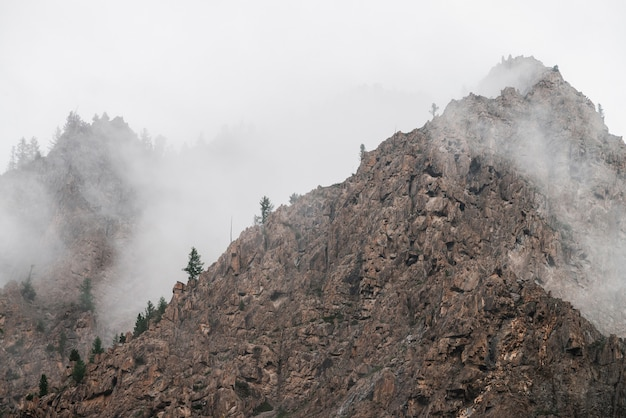 Ghostly alpine view through low clouds to beautiful rockies. dense fog among giant rocky mountains with trees on top. atmospheric highland landscape. big cliff in cloudy sky. minimalist misty scenery.