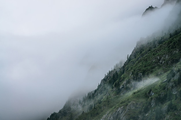 Ghostly foggy coniferous forest on rocky mountainside.
