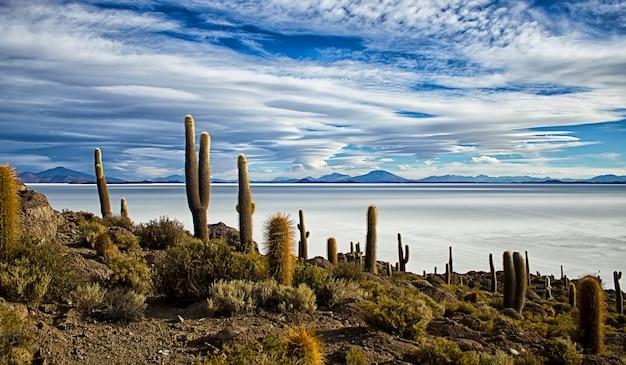 볼리비아 우유니(uyuni) 염습지의 암석 노두인 이슬라 델 페스카도(isla del pescado) 섬 또는 이슬라 잉카후아시(isla incahuasi)의 맑은 푸른 하늘의 염습지 배경에 있는 거대한 선인장