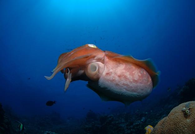 넓은 바다에서 헤엄치는 거대 오징어