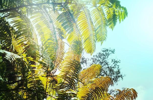 Гигантский лист папоротника в тропическом лесу. гавайи, сша