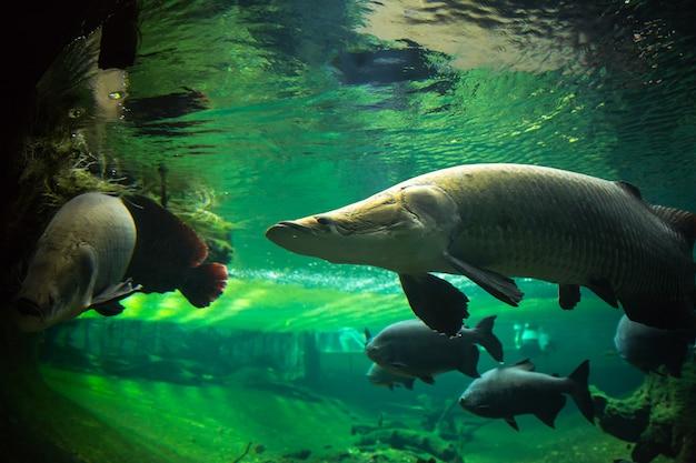 水中の巨大な魚
