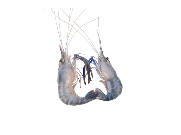 オニテナガエビ、白い表面に新鮮なエビの分離