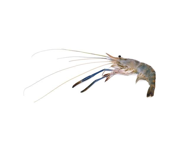 オニテナガエビ、新鮮なエビの分離