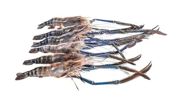 Гигантские пресноводные креветки, изолированные на белом фоне