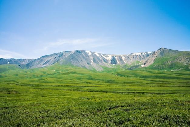 晴れた日には緑の谷の上に雪が降る巨大な山々。日光の下で豊かな植生と高地の木々のある牧草地