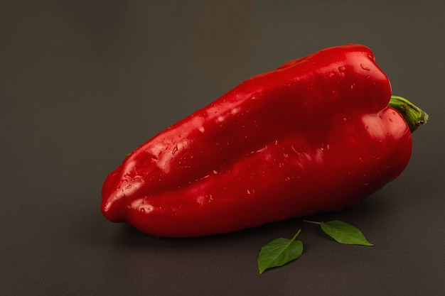 Giant red bell pepper isolated on black stone background. sweet vegetable, new harvest, fresh ingredient for healthy food. dark culinary wallpaper, copy space