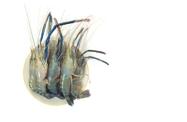 흰색 바탕에 거대한 강 새우 또는 거대한 민물 새우.