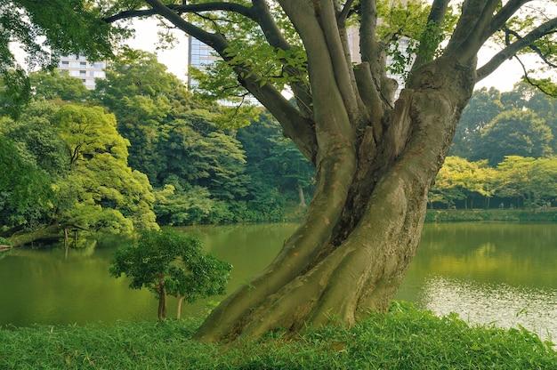 暑くて明るい夏の日に、有名な東京公園後楽園の池の水上に広がる巨大な景色の良い木