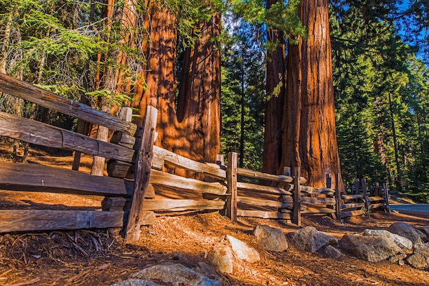 Giant sequoias place
