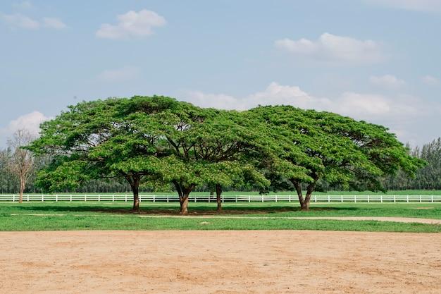 Giant tree in farm