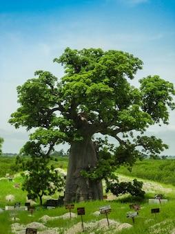 Гигантская дерево