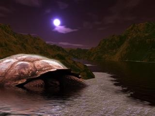 Giant turtle, dark