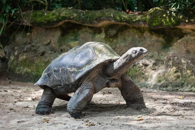 Giant turtle