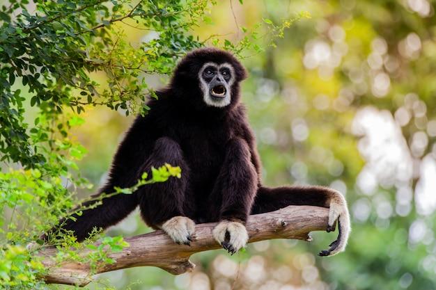 동물원의 나무에 긴팔 원숭이.