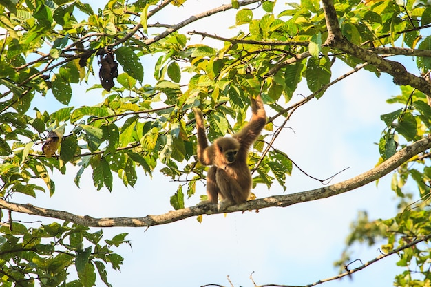 Gibbon sitting on a tree's branch in forest