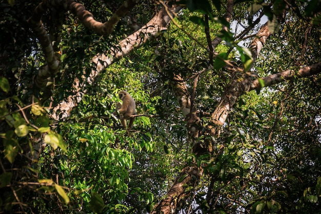 Gibbons in the forest