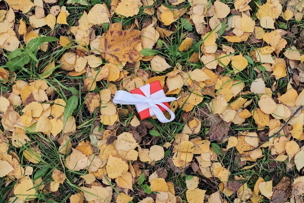 Gift box in autumn fallen leaves on ground in park