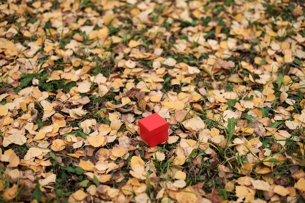 Gift box in autumn leaves, copy space