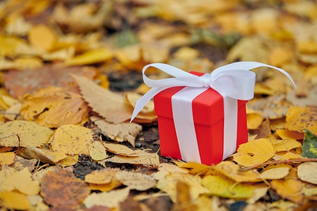 Gift box in autumn leaves, copy space.