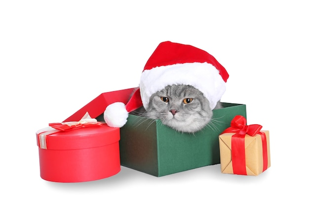 Gift box with cute cat in santa hat on white