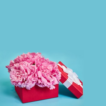 Подарочная коробка с цветами розовых пионов в красной упаковке на синей поверхности с копией пространства.