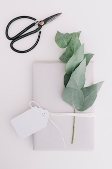 Gift package with blank tag and green leaves isolated over white backdrop