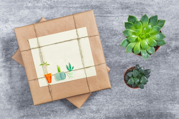 Gift wrapped in craft paper, succulent houseplant, watercolor drawing of indoor plants in pots.