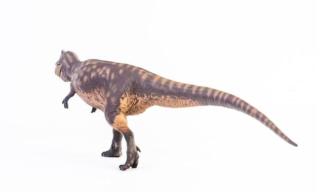 Giganotosaurus, dinosaur isolated .