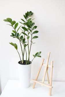 G屋内植物ザミオクルカスが白い鍋で育ち、イーゼルがテーブルの上に立つ