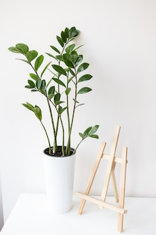 Gindoor plant zamiokulkas growing in a white pot, an easel stands on a table