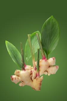 녹색 배경에 분리된 생강과 생강 잎