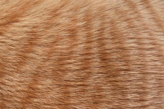 生姜猫の毛皮のテクスチャの背景