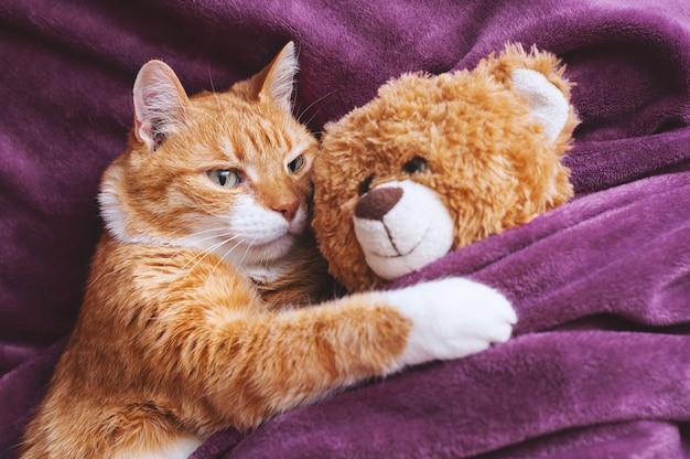 生姜猫がぬいぐるみを抱きしめる