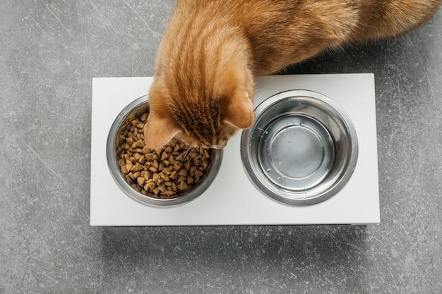 Рыжий кот ест из миски полноценный и сбалансированный рацион
