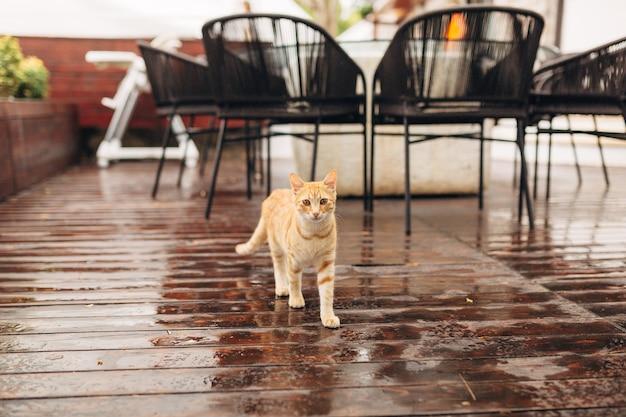 A ginger cat is walking through a restaurant.