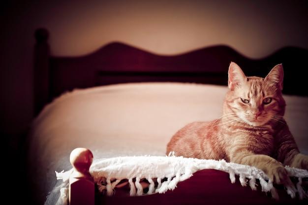 생강 고양이 침대에 누워